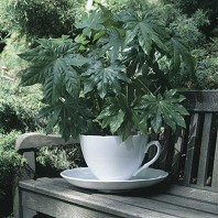 Cache Pot Design Tasse